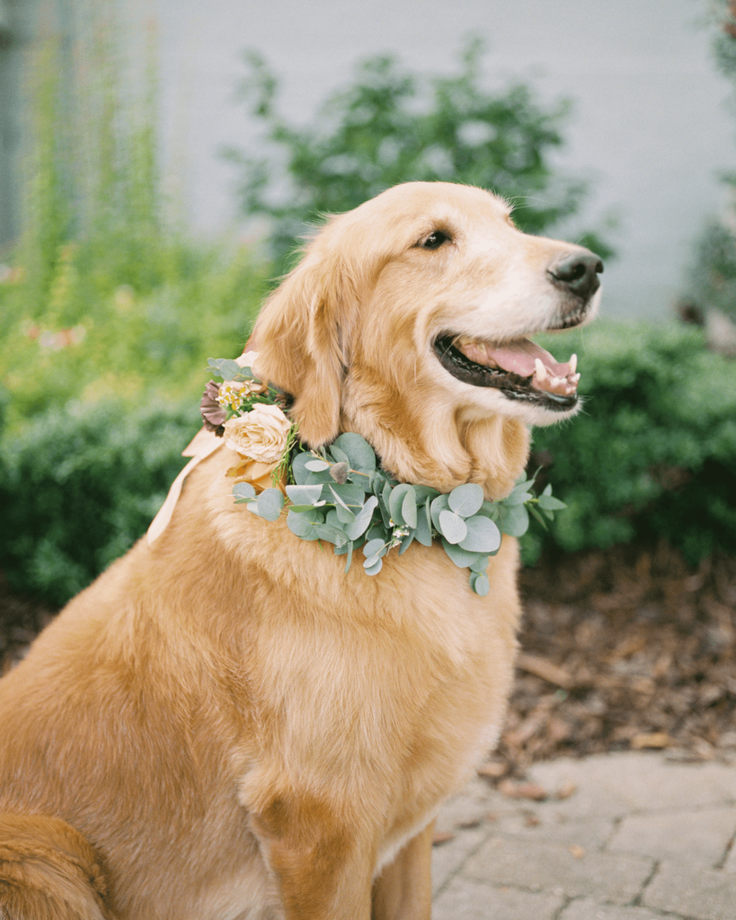 Corrie-and-Kevins-Fall-McAlister-Leftwich-House-Wedding-Kelsey-Nelson-Photography-Wedding Dog